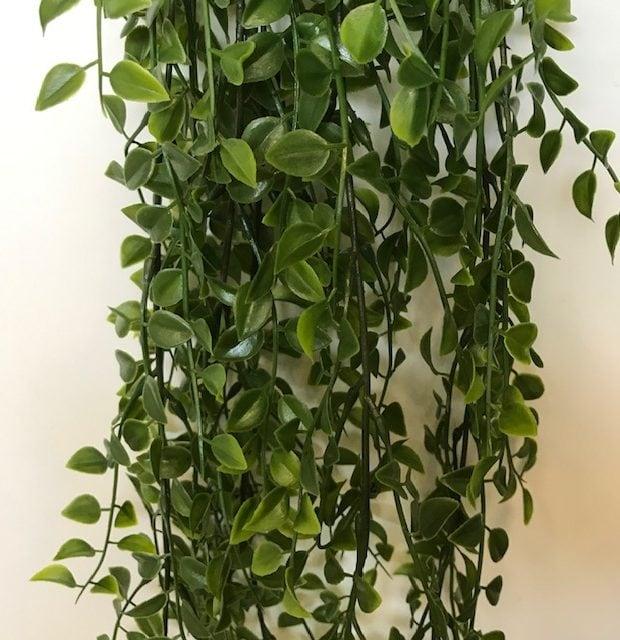 Hängepflanze 80cm Wetterfest