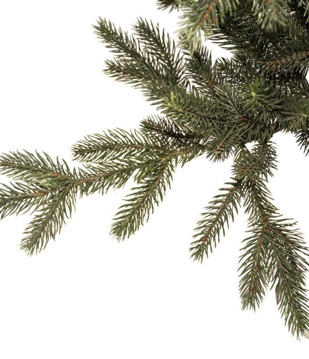 Tannenbaum 152cm nature edt.