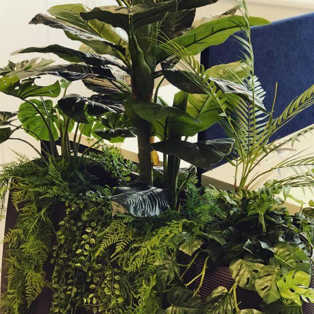 Künstliche Pflanzen fürs Büro   Besuchen Sie unseren neuen Online-Shop  ✅bonsai-kunstblumen.de  #bonsaikunstblumen #kunstpflanzen #büroeinrichtung #kunstblumen #strelitzie #pflanzenwelt #onlineshop