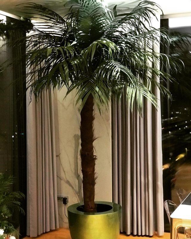 Künstliche Palme 330cm 🌴#palme #palmtree #coconutpalm #kunstpflanzen #custommade #einrichtung #interior #penthouse #dekoideen