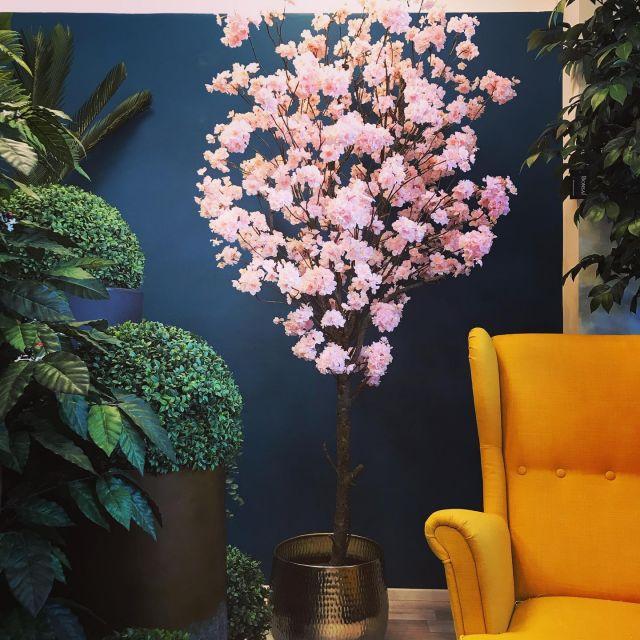 Blütenbaum 210cm mit Naturstamm 🍒🥰